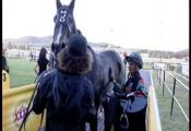 Embedded thumbnail for Race 6 - Happy 85Th B-Day F Lowson-Bm65 - Thelittleracketeer